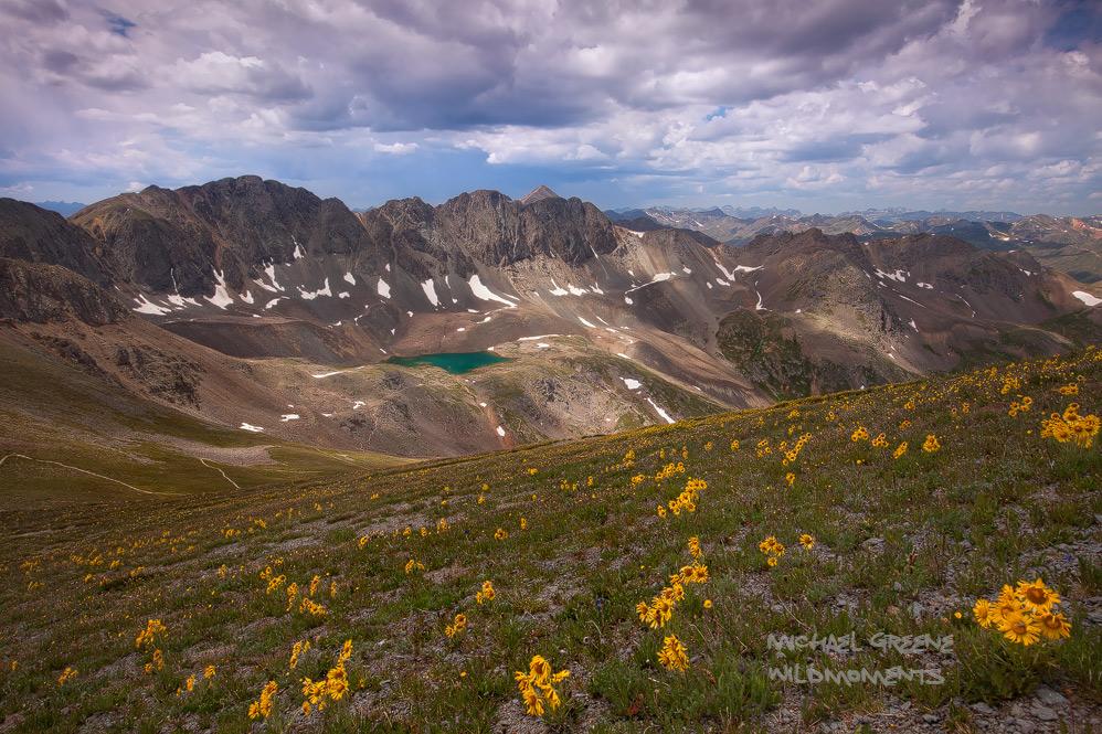 Old-man-of-the-mountain, alpine sunflower, American Basin, Handies Peak, San Juan Mountains, CO, , photo