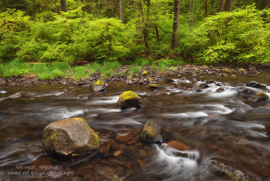 Silver Falls, State Park, Silver Creek, OR, Oregon, yellow, green, spring, peak, water, scene, photo