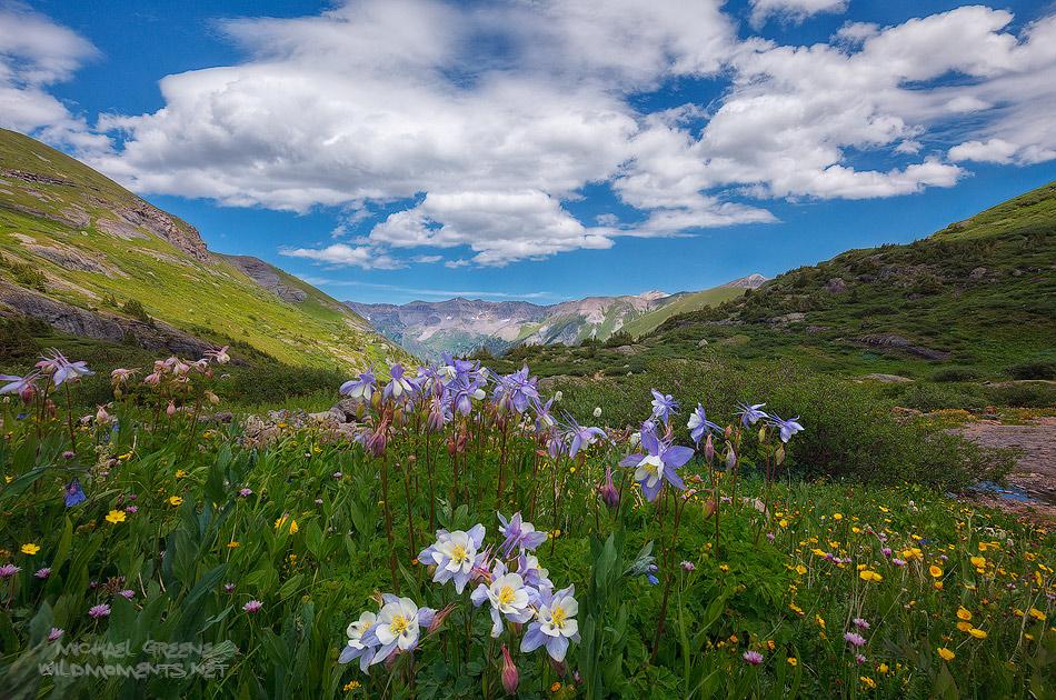 Columbine, wildflowers, hiking, San Juan Mountains, Telluride, beautiful, summer, San Juan Mountains, photo