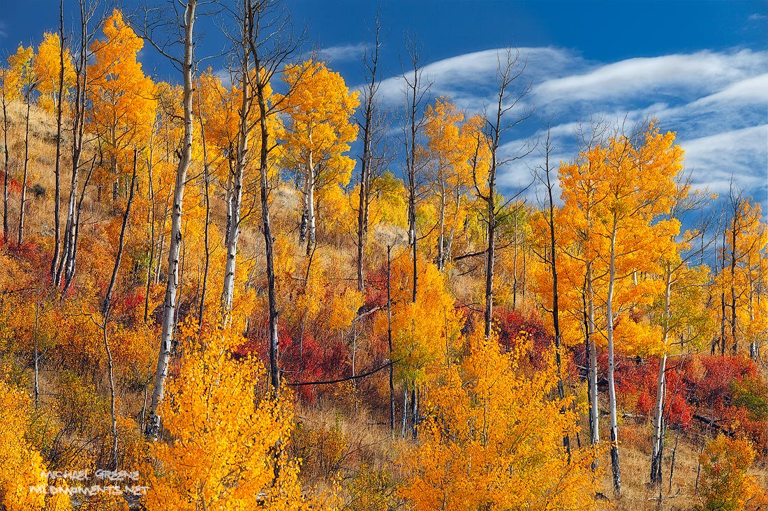 Gold, Elk Mountains, Silverthorne, CO, Colorado, autumn, blue, red, gold, morning, White River National Forest, photo