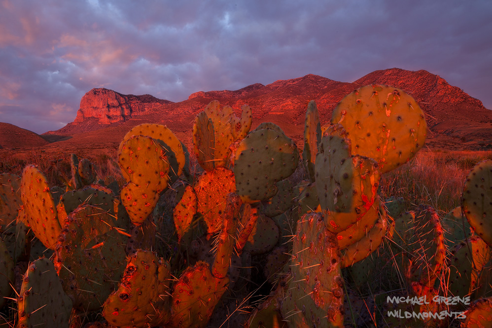 Texas, TX, Guadalupe Mountains, fiery, sunrise, red, crimson, prickly pear, cactus, Pine Springs Campground, peaks, stormy, photo