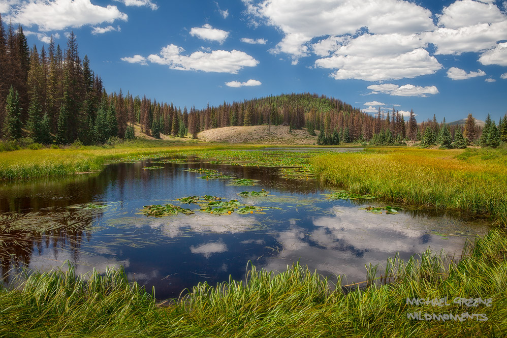 Lily pond, mountainside, conifers, South San Juan Wilderness, Platoro, CO, Rio Grande Wilderness, fly-fishing, photo