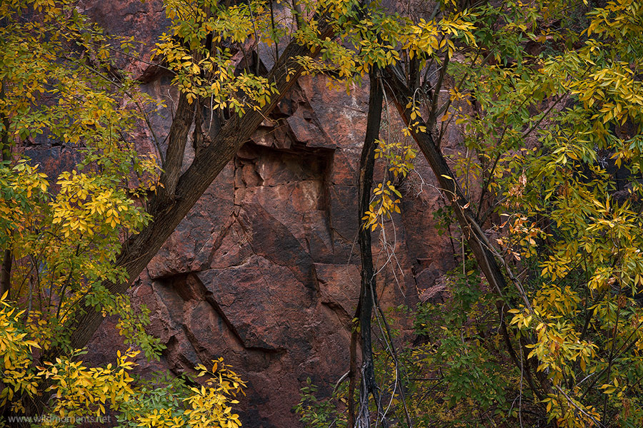 Aravaipa, canyon, rock, foliage, golden, beauty, Galiuro Mountains, Arizona, photo
