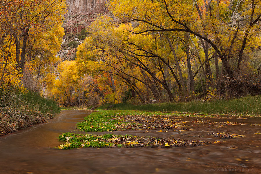 cottonwood, creek, silence, canyon, Galiuro Mountains, Arizona, photo