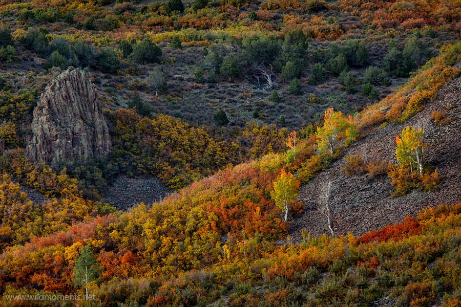 autumn, harvest, night, owl creek pass, scrub oak, aspen, trees, beautiful, uncompahgre national forest, colorado, photo