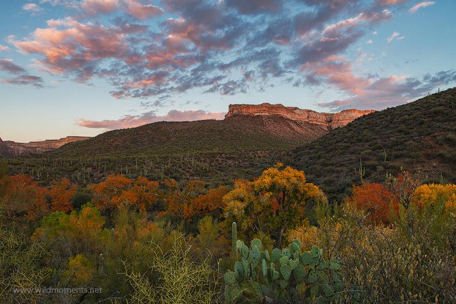 wilderness, canyon, creek, Aravaipa, Galiuro Mountains, Arizona, autumn, foliage, photo