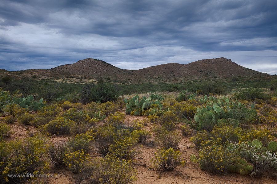 rabbitbrush, landscape, skies, desert, picture, Agua Fria National Monument, AZ, photo