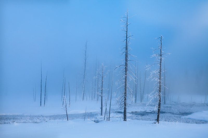 yellowstone national park, wyoming, frozen, trees, fog, photo
