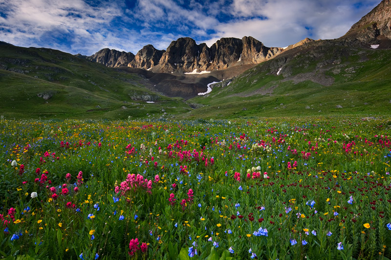 wildflowers, American Basin, CO, light, sunrise, photo