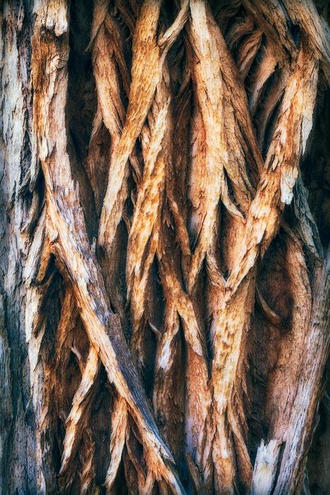 cottonwood tree, horseshoe canyon, canyonlands national park, utah, ut, photo