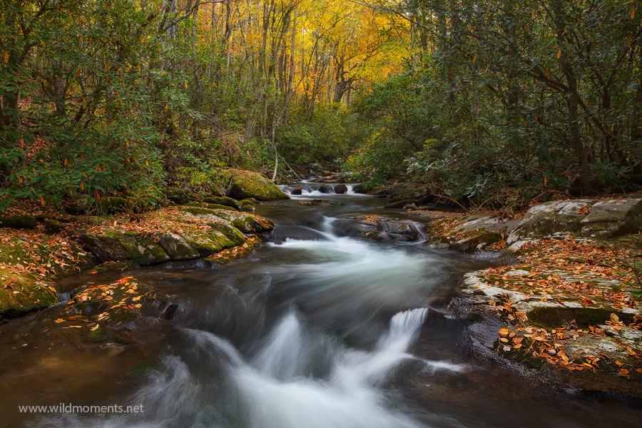 autumn, Rowland Creek, Bryson City, NC, North Carolina, Great Smoky Mountains, Road to Nowhere, photo