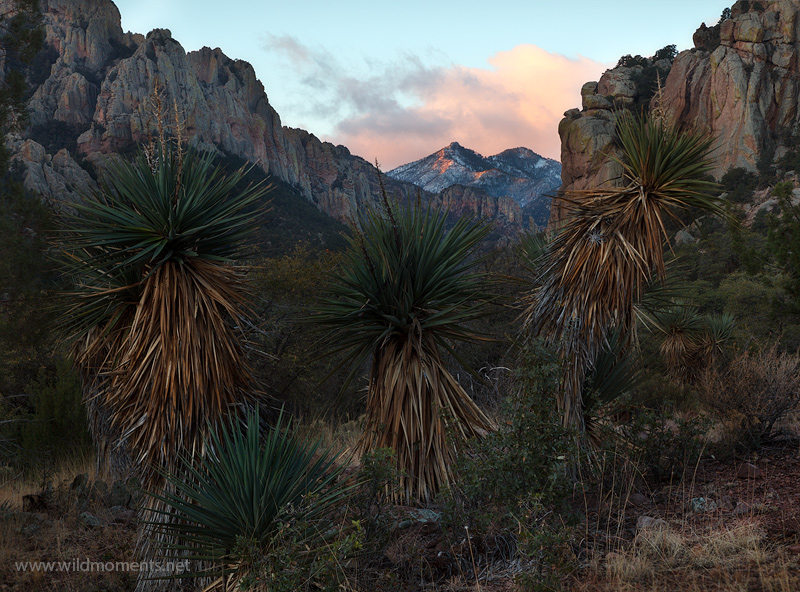 portal, az, arizona, storm, winter, cave creek canyon, chiricahua mountains,sunrise, cornonado national forest, photo