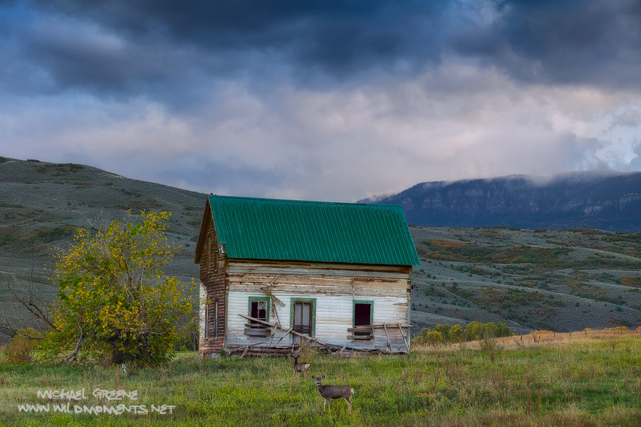 Uncompahgre National Forest, Colorado, barn, deer, night, sky, photo