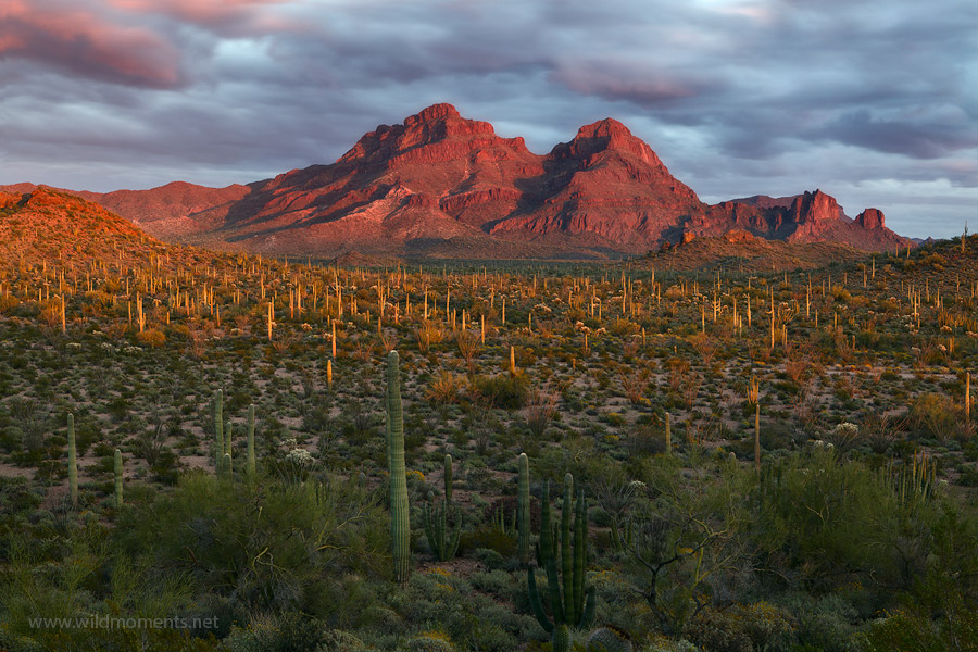 organ pipe cactus national monument, arizona, AZ, Mexico, Sonoran Desert, photo