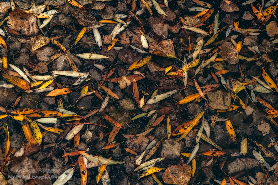 Galiuro Mountains, Arizona, leaves, decay, photo