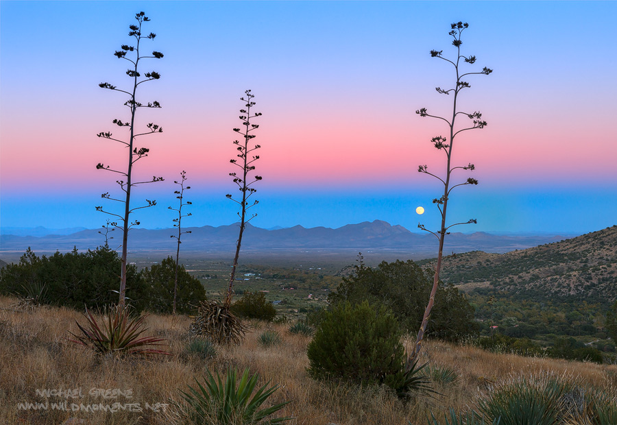 moonrise, AZ, Arizona, Pelonchillo Mountains, San Simon Valley, Chiricahua Mountains, Portal, New Mexico, century plants, full moon, photo