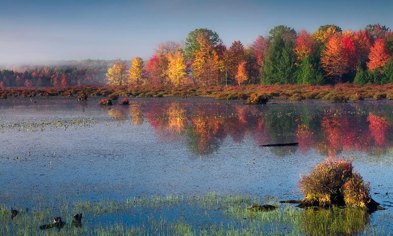 Black Moshannon State Park, PA, Pennsylvania, fog, sunshine, fall, swamp, wonderful, image, beautiful, foliage, incredib, photo