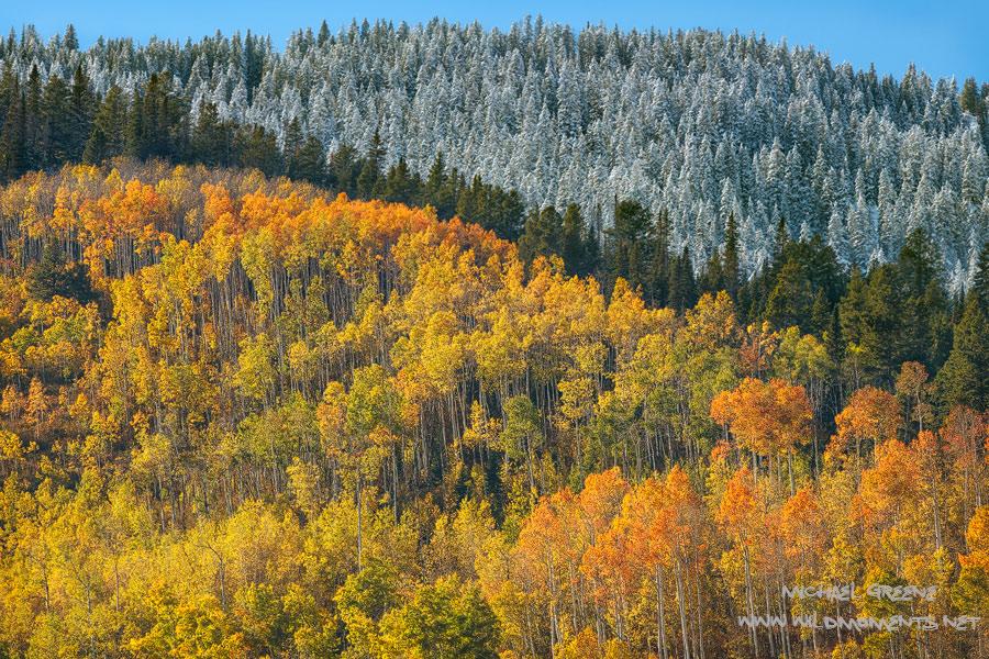 CO, Colorado, fall, autumn, image, blue, skies, sunshine, vibrant, White River National Forest, photo