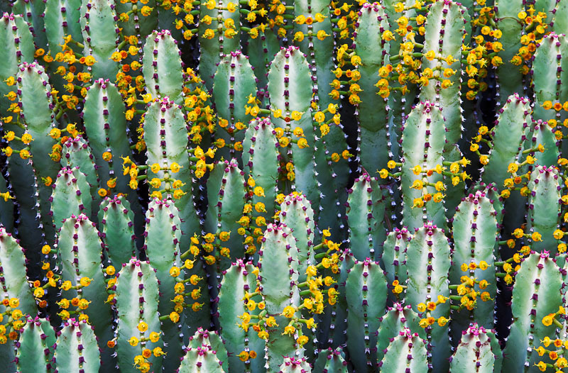 cactus, Arizona, Phoenix, Spring, bloom, colors, wonderful, photo