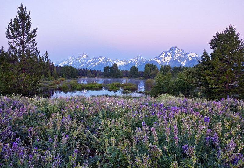 lupines, meadow, dawn, twilight, mountain, skyline, Wyoming, WY, Grand Teton National Park, photo