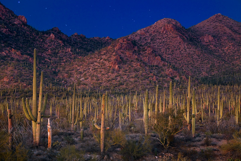 saguaro,night,sky,cacti,cactus, light, ambient, saguaro national park, az, photo