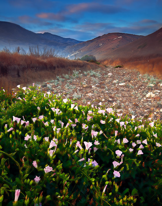 Channel Islands National Park, CA, California, Santa Cruz Island, California Morning Glory, fog, winter, isolation, , photo