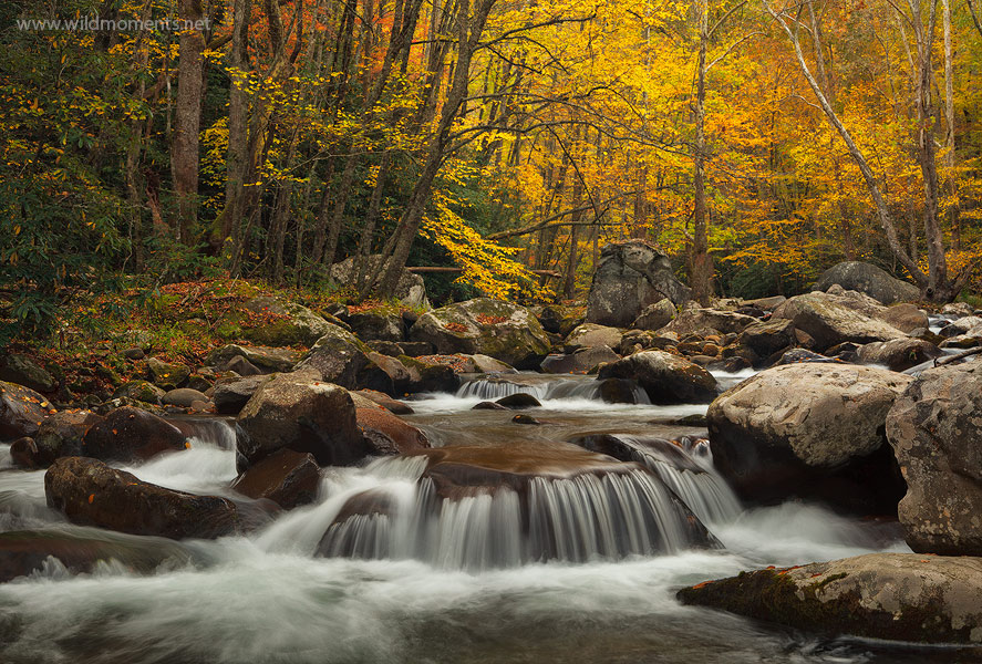 Big Creek trail, TN, NC, Great Smoky Mountains, North Carolina, rapids, autumn, photo