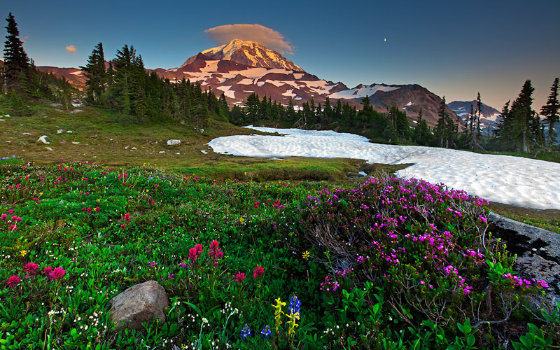 wildflowers, Mount Rainier, Spray Park, Washington, WA, Liberty Cap, flowers, sunset, snow, Magenta Indian Paintbrush, M, photo