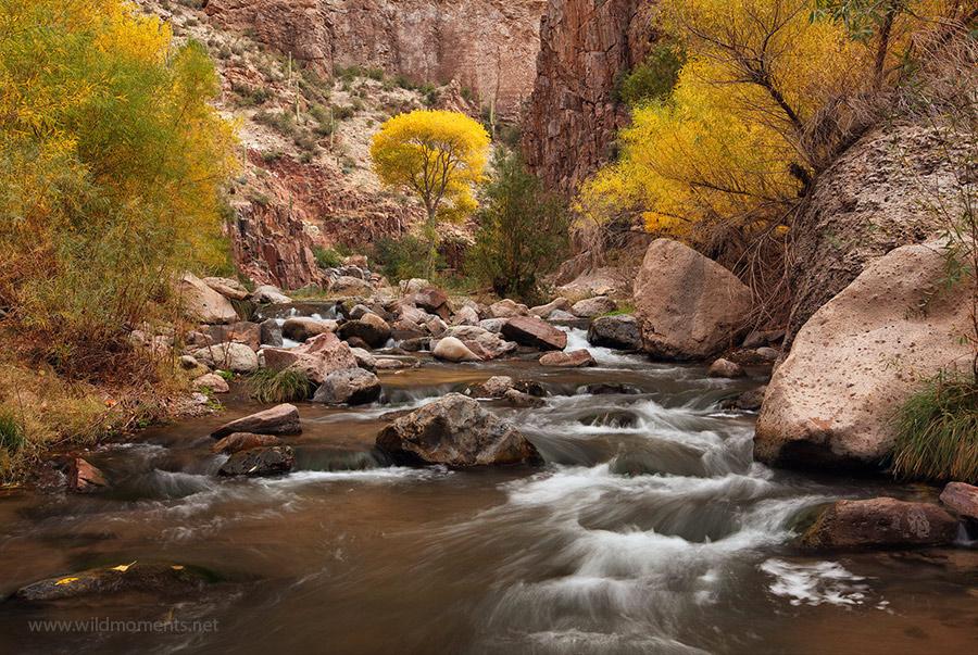 golden, cottonwood, tree, aravaipa canyon, hike, autumn, foliage, Galiuro Mountains, Arizona, photo