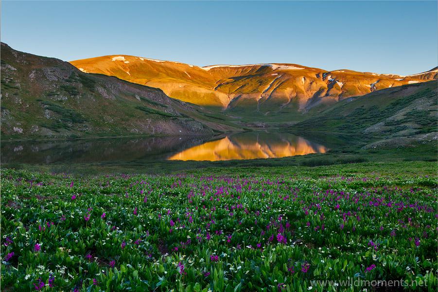 weminuche wilderness, sunrise, wildflowers, morning, co, photo