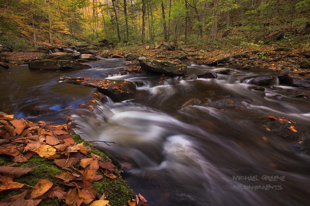 Kitchen Creek flows through Ricketts Glen State Park, which features two gorges (Glen Leigh and Ganoga Glen) that host nearly...