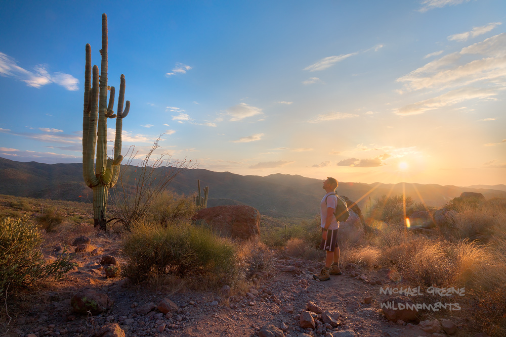 A solitary hiker admires the beauty of a large saguaro cactus while hiking near Picketpost Mountain. The trail to Picketpost...