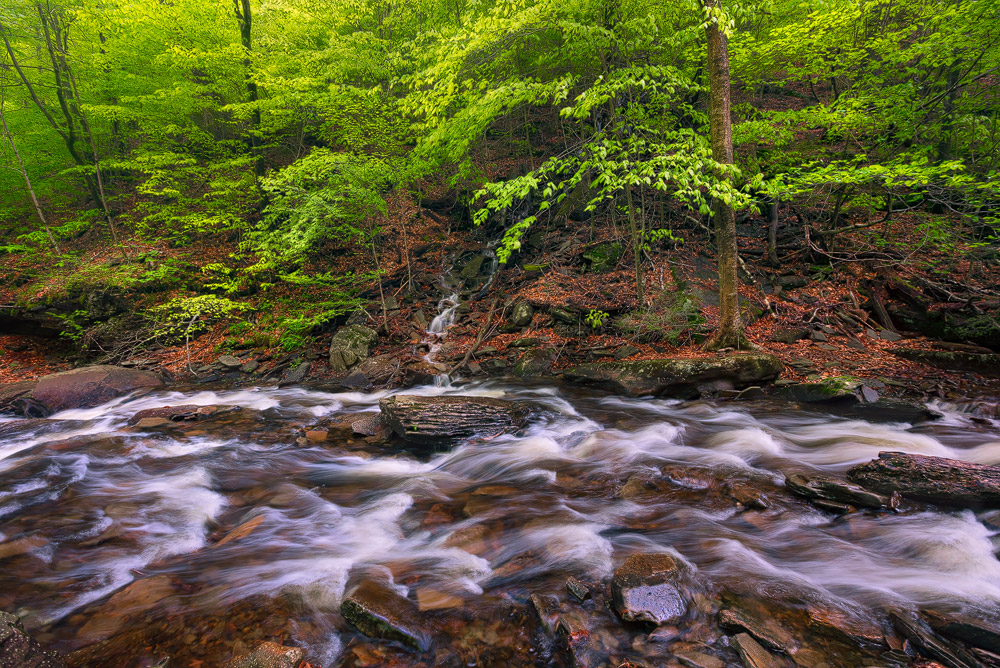 Kitchen Creek was flowing hard after heavy spring rains. Can you spot the small tributary in the scene?Ricketts Glen State...