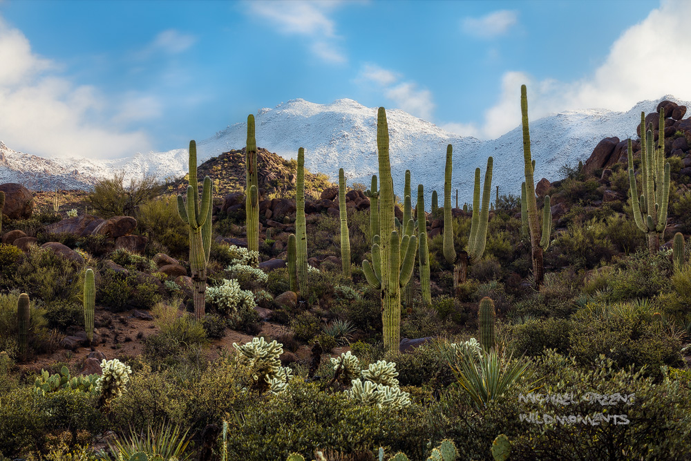 A rare New Year's Eve storm brought snow to the high country of the Four Peaks Wilderness near Fountain Hills, AZ. My search...