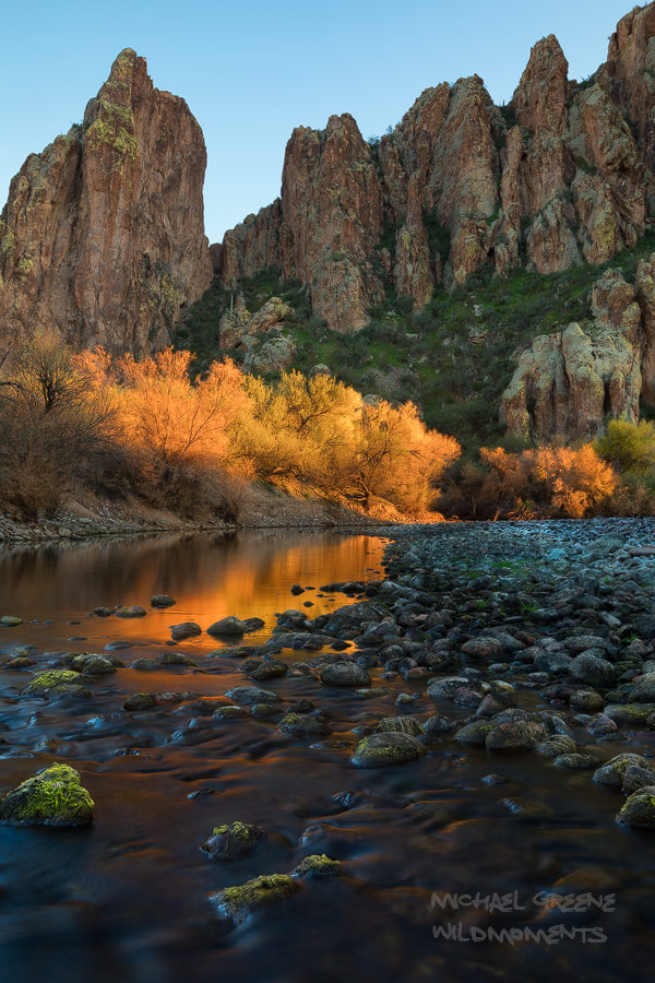 Late afternoon light reflects off of the autumn colors of tamarisk trees on the Salt River near Mesa, AZ.