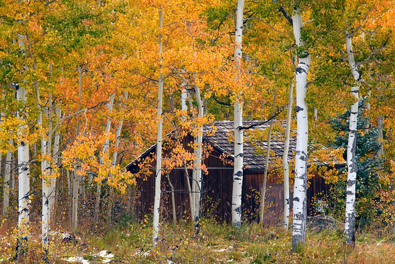 Fall brings color and privacy to the rustic areas like this cabin found near the Silver Jack Reservoir in the Uncompahgre National...