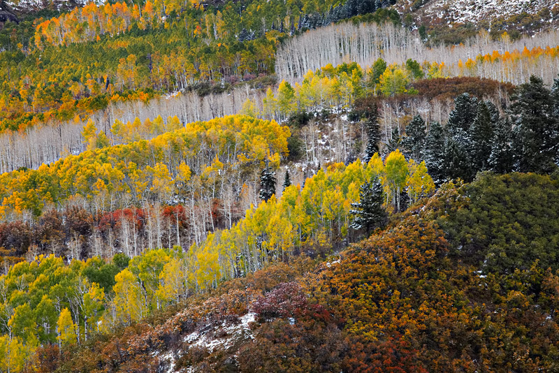 One of the more iconic view points at Owl Creek Pass shows off an incredibly diverse range of fall color as both trees and ground...