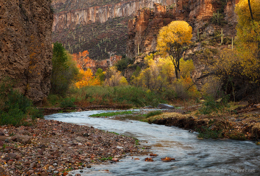 The sun breaks through the early morning clouds casting light on the canyon walls and colorful foliage after a night of heavy...