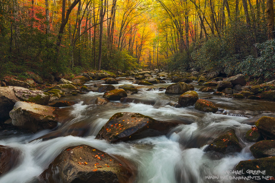 A delightful autumn scene of colorful foliage, massive boulders and raging rapids near the TN-NC border in Great Smoky Mountains...