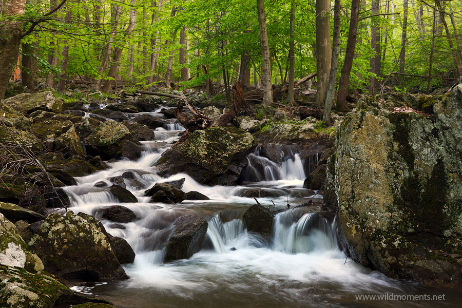 Big Hunting Creek flows through a jumbled mess of downed trees and moss covered boulders. This shot was captured less than half...