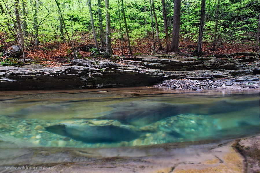 The incredible color and clarity of Rock Run is on display here in what was probably a 5 or 6 foot deep hole in the stream. &...