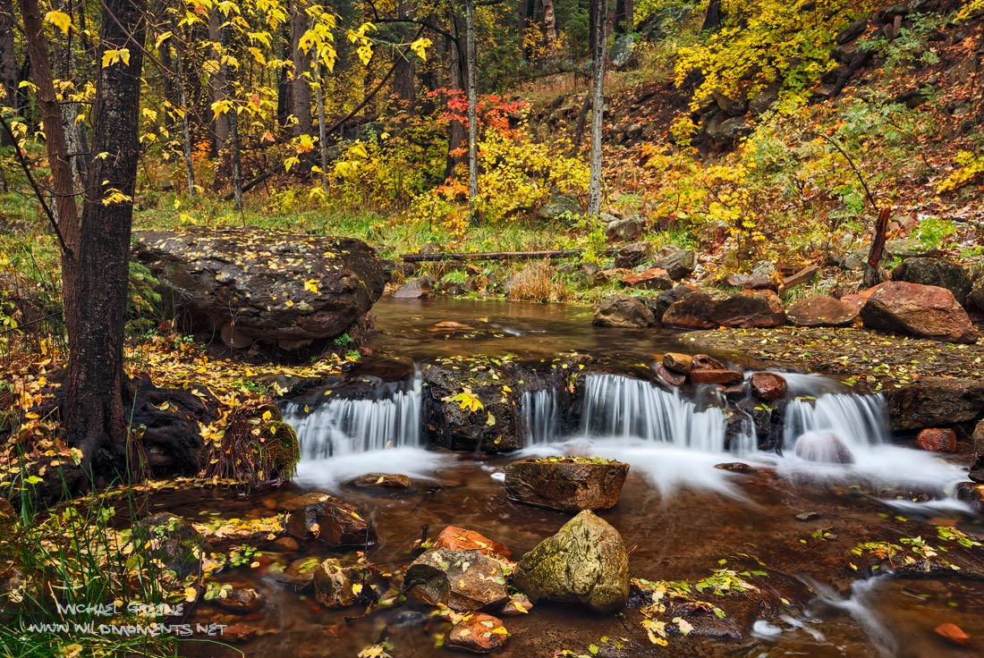 A smorgasbord of color during a blustery autumn day at Horton Creek outside of the Central Arizona mountain town of Payson on...