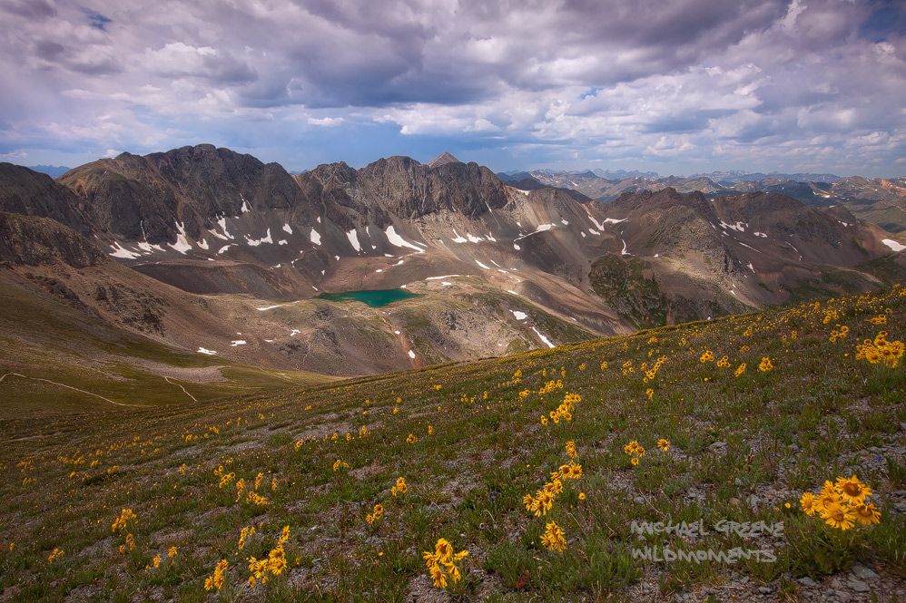 Old-man-of-the-mountain commonly referred to as an alpine sunflower grace the higher reaches of American Basin en route to 14...