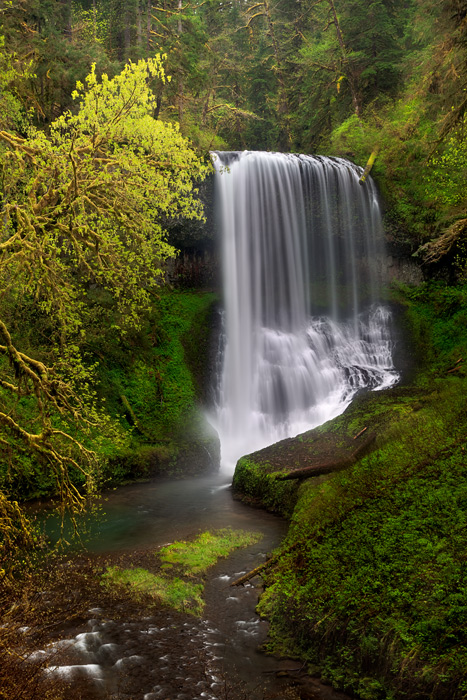 The dramaticMiddle North Falls pictured here during a morning shower at the peak of Spring near Silverton, OR.