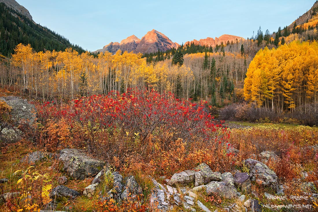 The mountains rejoice on a delightful autumn morning in the Maroon Bells - Snowmass Wilderness. This colorful image features...