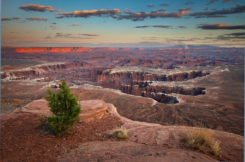 A solitaire, greenbush overlooks the subtle palettes of sunset near Grand View Point in Canyonlands NP, Ut. A fire beckons...