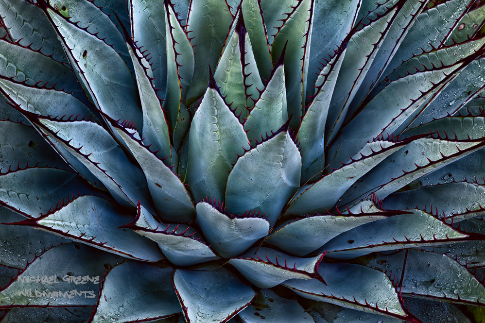 I stumbled upon this picture-perfect specimen of an agave while hiking along El Capitan trail. On my return route, the skies...
