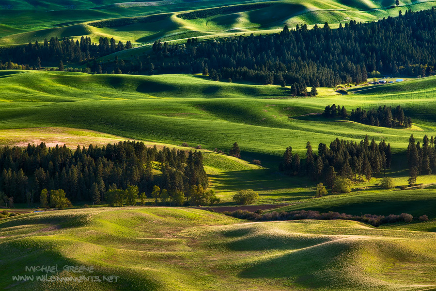 Golden light caresses the rolling green landscape of the Palouse in Eastern Washington. Captured in late spring.
