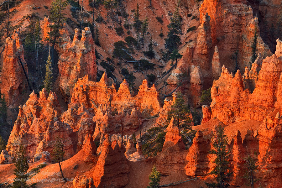 The first rays of light ignite the hoodoos of Bryce Canyon National Park in Garfield County, UT.