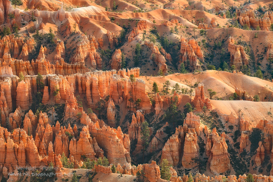 Morning light illuminates the rolling countryside of hoodoos and trees in Bryce Canyon National Park, UT.